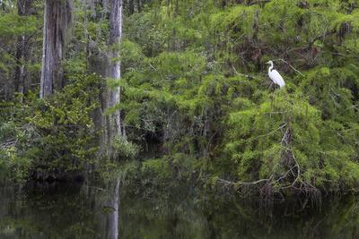https://imgc.allpostersimages.com/img/posters/great-egret-in-everglades-national-park-florida-usa_u-L-PXR8QD0.jpg?p=0