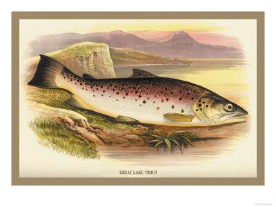https://imgc.allpostersimages.com/img/posters/great-lake-trout_u-L-P2AEFJ0.jpg?artPerspective=n