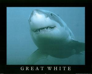 Great White Shark Art Photo