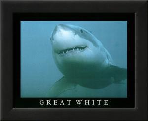 Great White Shark Art Photo