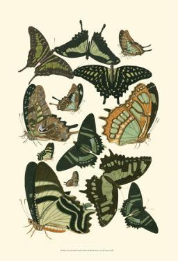 Green Butterfly Study