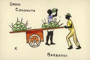 Green Coconuts, Barbados