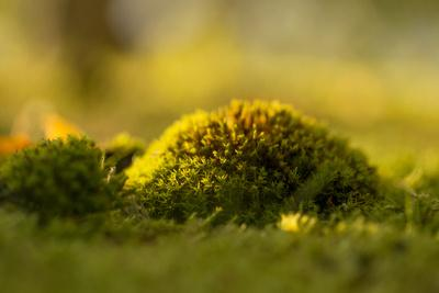 https://imgc.allpostersimages.com/img/posters/green-moss-in-sunset-light_u-L-Q1EXPSF0.jpg?artPerspective=n