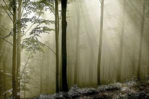 Green Woods 2