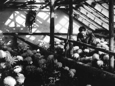 https://imgc.allpostersimages.com/img/posters/greenhouse-nursery_u-L-Q10790A0.jpg?p=0