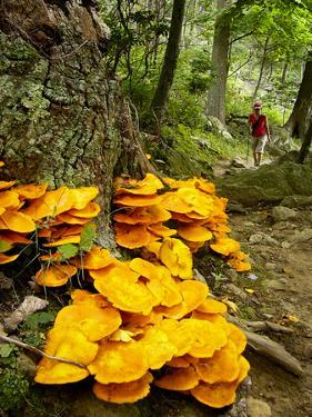 A Woman Hikes a Trail Up Old Rag Mountain Near Mushrooms by Greg Dale