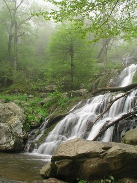 Dark Hollow Falls in Shenandoah National Park by Greg Dale