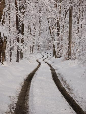 Tire Tracks Down a Mountain Road after a Snowfall by Greg Dale