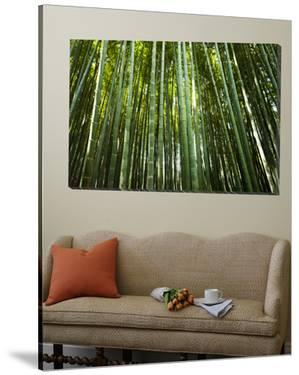 Bamboo Forest, Arashiyama-Sagano District by Greg Elms