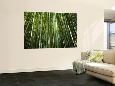 Bamboo Forest, Arashiyama-Sagano District by Greg Elms