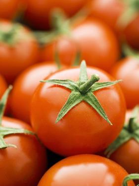 Fresh Tomatoes by Greg Elms