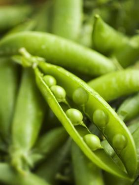 Pea Pods, One Open by Greg Elms