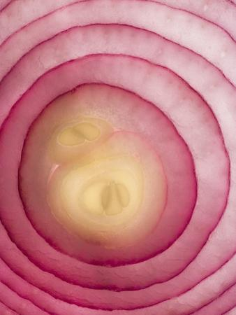 Red Onion by Greg Elms