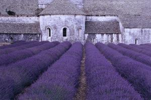 Lavender Abbey by Greg Gawlowski