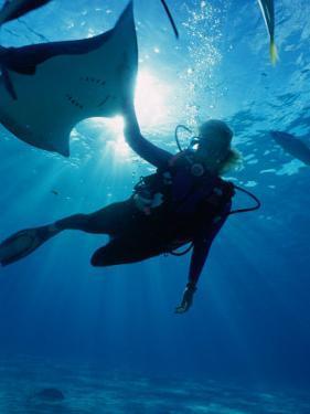 Diving at Stingray City on Grand Cayman, Grand Cayman, Grand Cayman, Cayman Islands by Greg Johnston