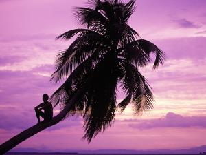 Young Boy in Palm Tree at Sunset by Greg Johnston
