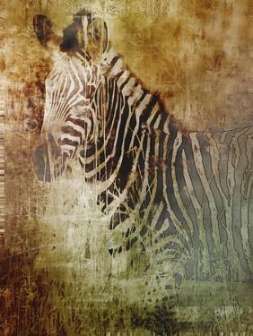 Africa Zebra by Greg Simanson