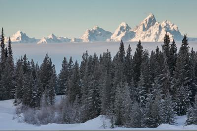 A Winter Forest Scene with the Teton Range in the Distance