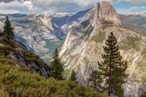 Half Dome and Pine Trees in the Foreground by Greg Winston