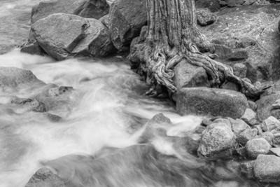 Water Flowing Near Weathered Tree Roots