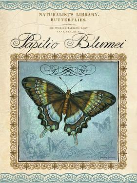 Papilio Blumei by Gregory Gorham