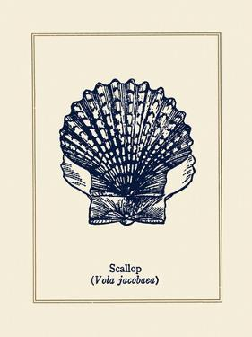 Scallop Shell by Gregory Gorham