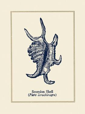 Scorpion Shell by Gregory Gorham