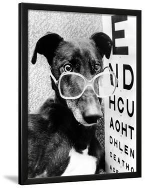 Greyhound Wearing Glasses February 1987
