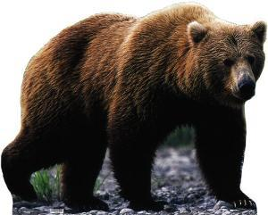 Grizzly Bear Lifesize Cardboard Cutout