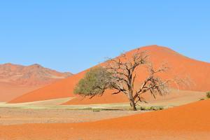 Grass and Dune Landscape near Sossusvlei, Namibia by Grobler du Preez