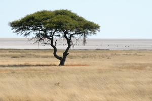 Lonely Tree Landscape by Grobler du Preez
