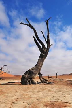 Lonely Tree Skeleton, Deadvlei, Namibia by Grobler du Preez
