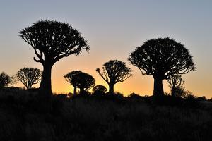 Sunset at the Quiver Tree Forest, Namibia by Grobler du Preez