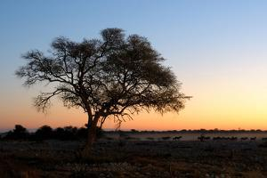 Sunset at the Waterhole at the Okaukeujo Rest Camp, Etosha National Park, Namibia by Grobler du Preez