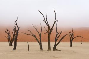 Tree Skeleton by Grobler du Preez