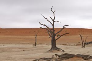 Tree Skeletons at Deadvlei, Namibia by Grobler du Preez