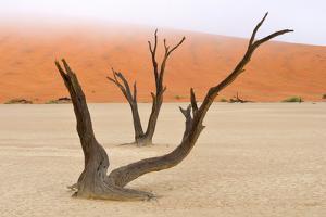 Tree Skeletons, Deadvlei, Namibia by Grobler du Preez