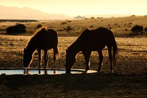 Wild Horses of the Namib by Grobler du Preez