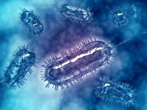 Group of Escherichia Coli Bacteria Cells, known as E. Coli