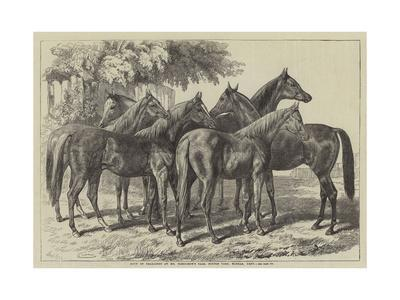 https://imgc.allpostersimages.com/img/posters/group-of-yearlings-at-mr-blenkiron-s-sale-middle-park-eltham-kent_u-L-PUSNOY0.jpg?p=0