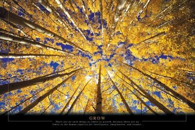 Grow - Trees