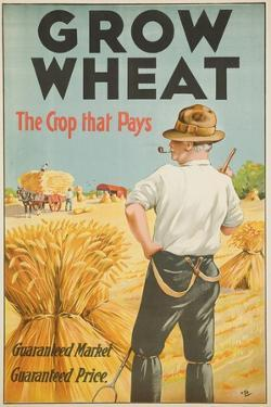 Grow Wheat the Crop That Pays