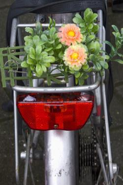 Bicycle with Flowers by Guido Cozzi