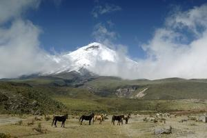 Horses in Cotopaxi National Park by Guido Cozzi