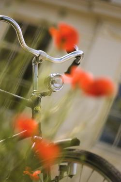 Old Bicycle and Flowers by Guido Cozzi