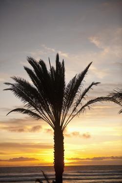 Palm Tree along Sea Promenade, Playa De Las Americas, Tenerife, Canary Islands, Spain by Guido Cozzi