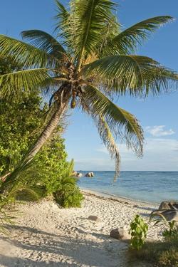 Source D'argent Beach, La Digue, Seychelles, Indian Ocean Islands by Guido Cozzi