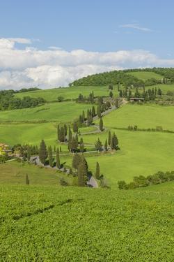The Famous Road near Monticchiello by Guido Cozzi