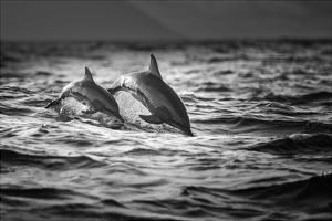 The Mother And The Baby by Gunarto Song