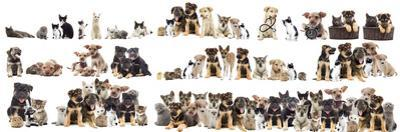 Set of Pets by gurinaleksandr